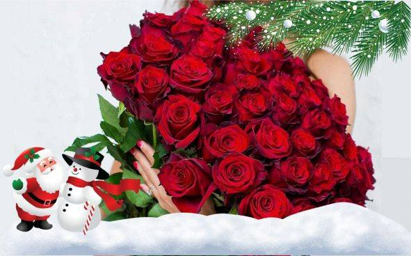 Лафайет цветы тюмень